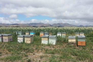 Blue Sky Beekeeping honey bee hives