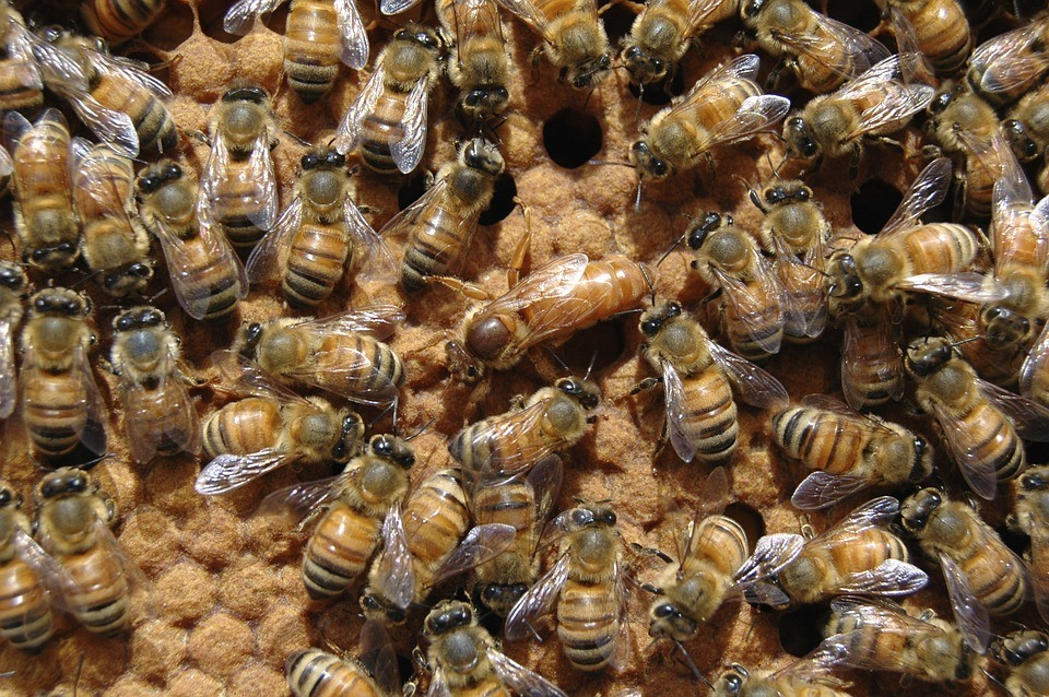 buy queen honey bees from Blue Sky Beekeeping