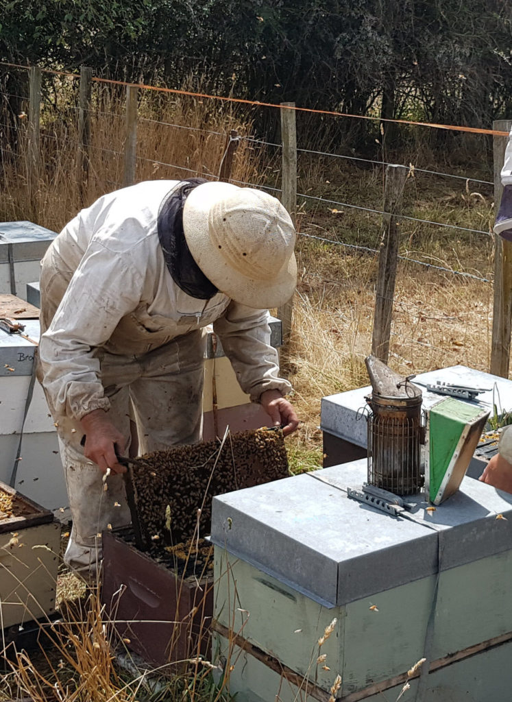 Blue Sky Beekeeping working with bees